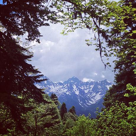 Вид на горы из леса